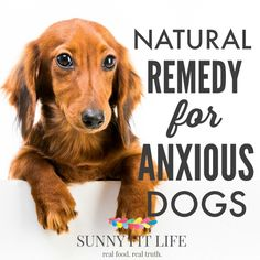 Learn how to calm anxious dogs with this natural remedy that really works! Your dog will feel calm and peaceful in no time with these simple tips. Dog Separation Anxiety, Dog Anxiety, Dogs With Anxiety, Anxiety Help, Dog Stress, Essential Oils Dogs, Dog Health Tips, Pet Health, Dog Training Classes