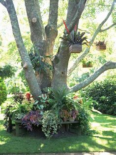 Fill vertical space in your landscape—without paying for pricey trees—with hanging planters. Most plants that can live on the floor of a garden can be hung from a branch or a post.