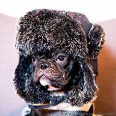 Sochi, anyone? French Bulldog