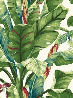 White with Red Banana Leaf Wallpaper
