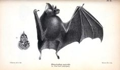 Bat – Full body