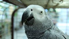 Parrot's  Beak bird | Animals. Birds. Beak large parrot