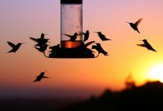 look at all these hummingbirds!