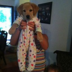 Labrador Puppies - 30 Pictures