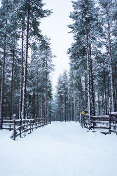 Explore Finnish Lapland in 20 Snowy Pictures
