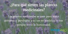 La planta de #lavanda se considera una hierba medicinal de efectos calmantes y se utiliza para tratar el estrés, la ansiedad y el insomnio.