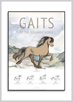 Hesteplakat: Gangartsplakat med Islænder fra Ping Pong Posters