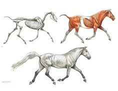 ArtStation - Animal Anatomy and Anatomy Sketchbook Studies, Terryl Whitlatch