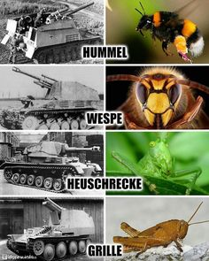 German SPGs named after insects Word Of Tank, Armored Truck, Tank Armor, Funny Tanks, Armored Fighting Vehicle, Military Weapons, German Army, Tank Girl, Panzer