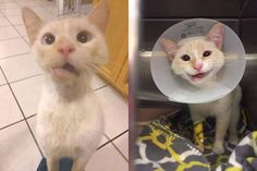 Wednesday's Most Unique: You Can Be Damaged And Still Be Beautiful! -     Viral Spell's Wednesday's Most Unique presents a cat which has suffered a terrible injury and yet she proves that imperfection doesn't mean ...