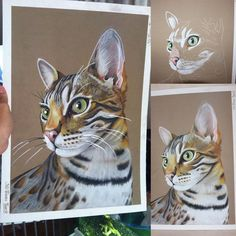 60 отметок «Нравится», 16 комментариев — Enora CAPITAINE (@enora_capitaine) в Instagram: «#art #draw #drawing #chat #cat #bengal #bengalf1 #savannah #animals #dessin #pastel #canson…»
