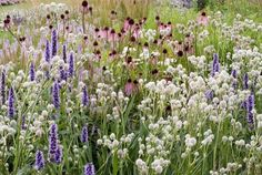 This prairie style planting is composed of vigorous perennials which will add drama in your garden from early summer to fall.