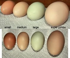 How to use different size eggs in recipes