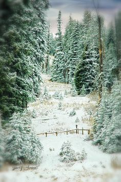 Snow Covered Path Photograph - Mary Timman