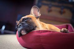 Sleeping on the Job by clo.a.lpz, via Flickr
