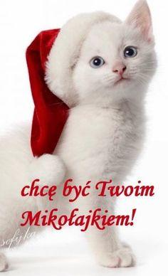 Kartka pod tytułem Chcę być Twoim Mikołajkiem Cats, Animals, Christmas, Photography, Xmas, Gatos, Animales, Photograph, Animaux