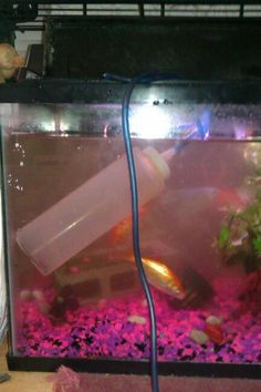 1000 images about pets fish on pinterest fish tanks for How to clean an old fish tank