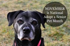 November Is National Adopt A Senior Pet Month! <3