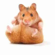"""Résultat de recherche d'images pour """"elevage souris"""""""