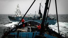 Video: Balleneros japoneses atacan barcos de Sea Shepherd