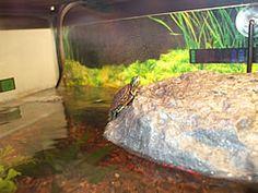 Outside Turtle Tank : turtle habitat more pet turtle aquatic turtle habitat turtle tank ...