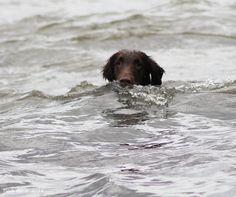 my Ruffe strong swimmer