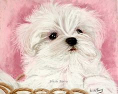 "Maltese Dog Puppy Painting 10""x8"" Animal Art Print, Wall Art, Gift for Dog Lovers"
