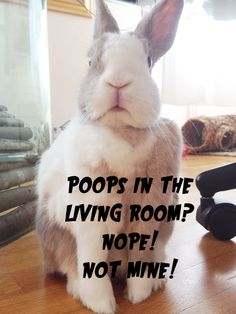 Poops in the living room? Nope! Not mine! Tiffo ///// as a matter of fact I'm HIGHLY insulted.