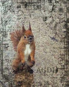 Squirl in Lazienki Park (Warsaw) #warsaw #poland #squirl #squirls #garden #gardens #lazienkipark #park  #parka #parko #skiouros #kipoi #animal #animals #animallover