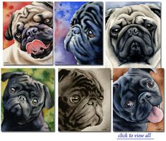 Watercolor Pugs #pugs
