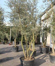 Mediterranean Garden, Backyard, Patio, Garden Plants, Im Not Perfect, Home And Garden, Garages, Ibiza, Garden Ideas