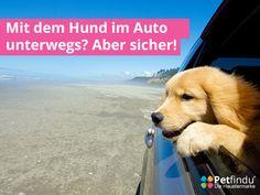 Mit dem Hund im Auto unterwegs