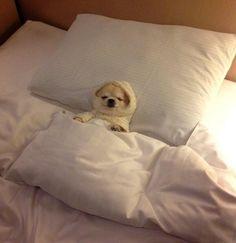 Sleep well, mommy - daylol.com