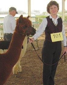 alpaca fleece quality how to tell what is important