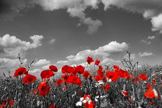Remembrance Day Poppy Field. Lest we forget.