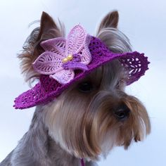 Hat for dog Orchid Dog Sun Hats Party Hats by finehatsforanimals
