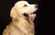 More than half of Golden Retrievers will develop cancer. Our goal is to help change that. Download our FREE Pet Cancer Information Kit to know all the warning signs of cancer in your pet.   Download here: http://mrr.is/1rFbAgQ