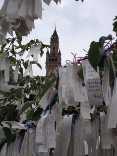 The Wishtree @ Peace palace the Hague Wensboom @Vredespaleis DenHaag
