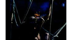 En fotos: a un año del cierre del Zoológico de Buenos Aires, los animales aún siguen en sus jaulas  Un chimpancé sostiene una hoja sentado sobre sogas en su recinto. Foto: AP / Natacha Pisarenko
