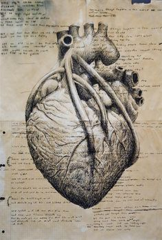 chris - sketch of anatomical heart