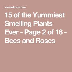 15 of the Yummiest Smelling Plants Ever - Page 2 of 16 - Bees and Roses