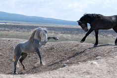 Look At These Gorgeous Photographs Of Wild Horses