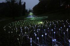 Campo De luz:Artista usa 50.000 luzes para transformar o deserto em paisagens incríveis