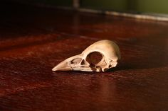 polymer clay bird skull