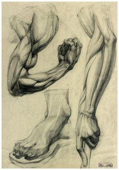 Exceptional Drawing The Human Figure Ideas. Staggering Drawing The Human Figure Ideas. Arm Anatomy, Anatomy Poses, Body Anatomy, Anatomy Art, Atlas Anatomy, Human Anatomy Drawing, Body Drawing, Life Drawing, Feet Drawing