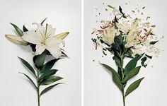 Broken Flowers / by Jon Shireman