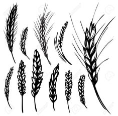 rye wheat illustration - Google Search