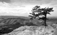 windows wallpaper tree, 457 kB - Walton Sheldon