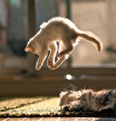 Cat Falling - 32 Pictures
