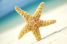 Seastar On Beach, #starfish #beach